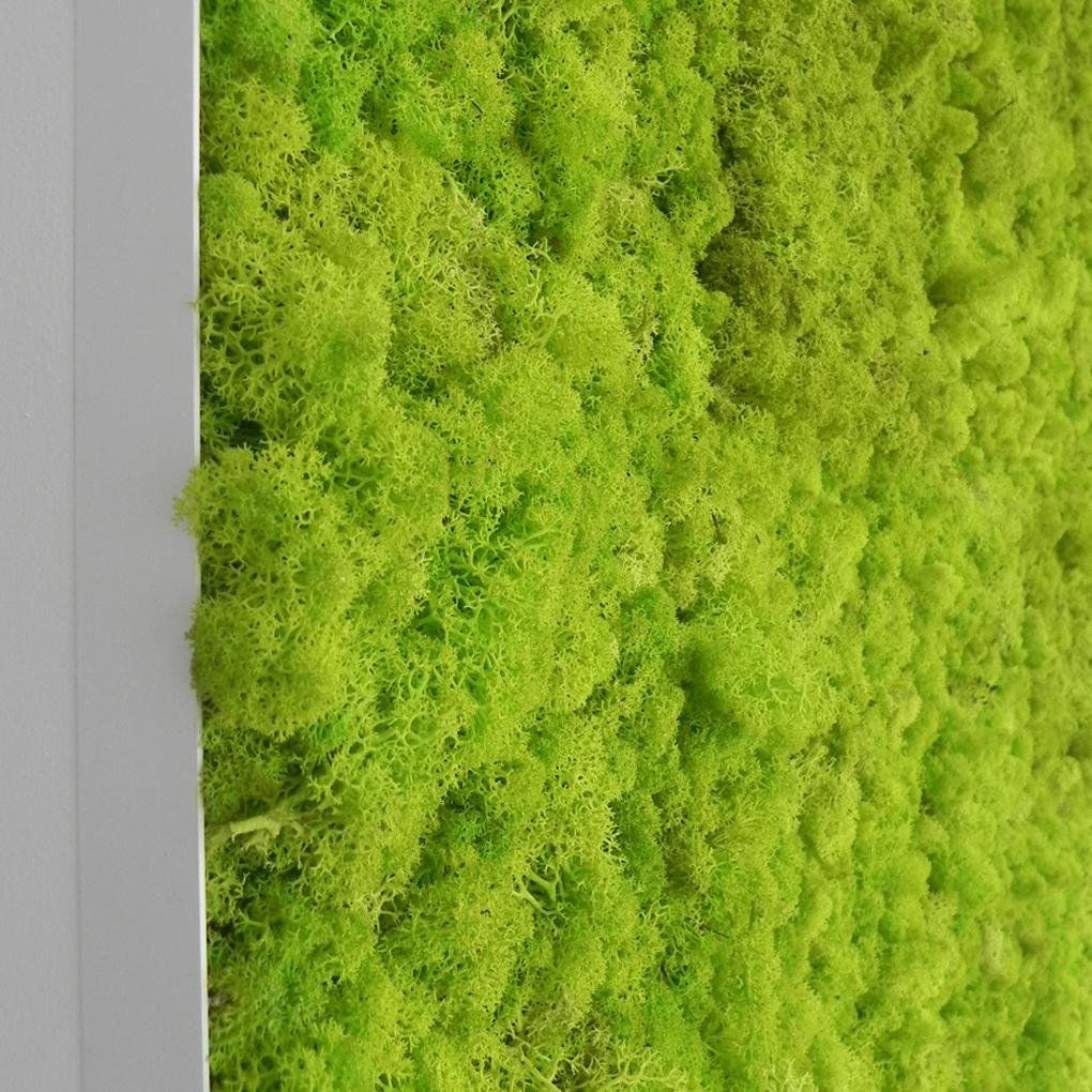 zeleni-zidovi-dukley-gardens